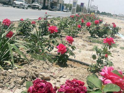 باغچه آرایی و اکشت گل و نهال در بلوار روستا